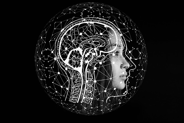 Az agy és a hozzá kapcsolható intelligencia területek